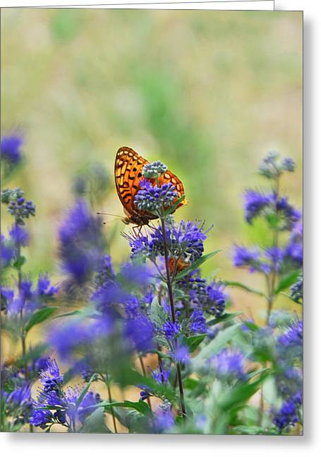 Julie Magers Soulen Greeting Cards - Butterfly on Catmint Flower Greeting Card by Julie Magers Soulen