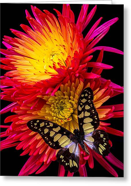 Antenna Greeting Cards - Butterfly On Fire Mum Greeting Card by Garry Gay