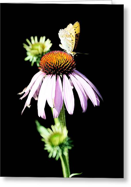Europe Mixed Media Greeting Cards - Butterfly on flower Greeting Card by Toppart Sweden