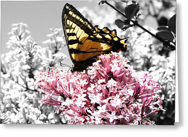 Insect Mixed Media Greeting Cards - Butterfly on Lilac Greeting Card by Mellisa Ward