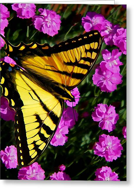 Maine Spring Greeting Cards - Butterfly on Pink Greeting Card by Bill Caldwell -        ABeautifulSky Photography