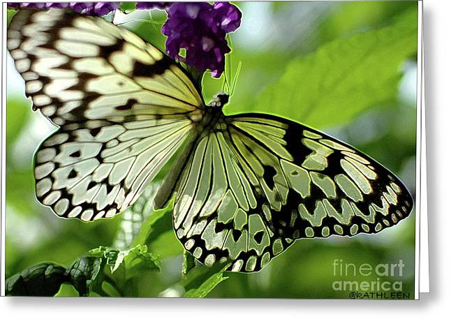 Struckle Greeting Cards - Butterfly On Purple Greeting Card by Kathleen Struckle