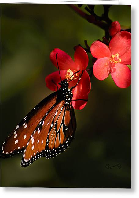 Penny Lisowski Greeting Cards - Butterfly on Red Blossom Greeting Card by Penny Lisowski