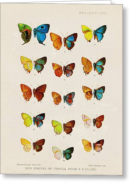 Butterfly Plate Greeting Card by Pati Photography