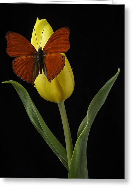 Yellow Leaves Greeting Cards - Butterfly Resting On Yellow Tulip Greeting Card by Garry Gay