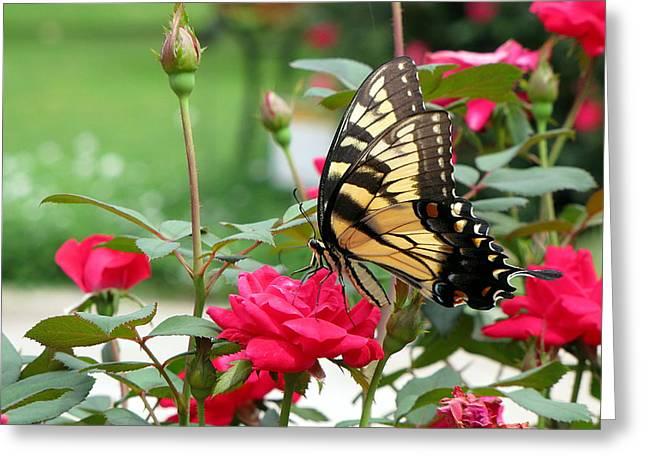 Greg Simmons Greeting Cards - Butterfly Rose Greeting Card by Greg Simmons