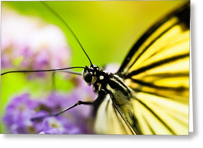 Bug Greeting Cards - Butterfly Greeting Card by Sebastian Musial