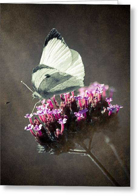 Loriental Greeting Cards - Butterfly Spirit #02 Greeting Card by Loriental Photography