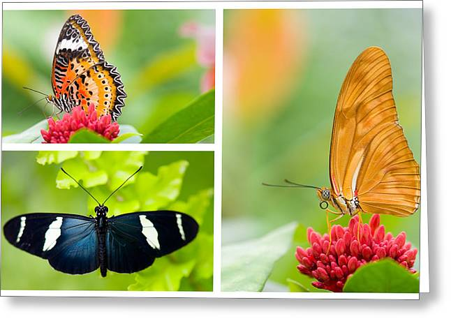 Butterflies Pyrography Greeting Cards - Butterfly Greeting Card by Steffen Gierok
