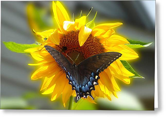 Print Photographs Greeting Cards - Butterfly Sunday Greeting Card by B Wayne Mullins