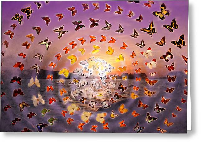 Anne Cameron Cutri Greeting Cards - Butterfly Sunset Greeting Card by Anne Cameron Cutri