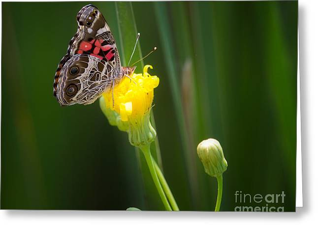 Metro Park Greeting Cards - Butterfly Greeting Card by Todd Bielby