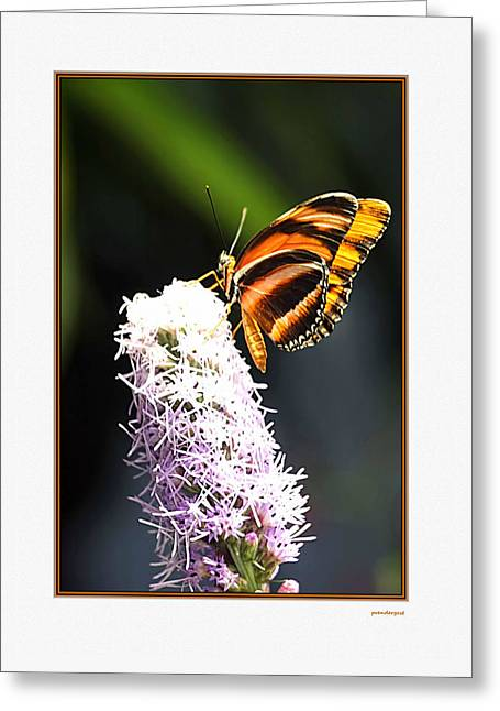 Flower Photographers Greeting Cards - Butterfly Greeting Card by Tom Prendergast
