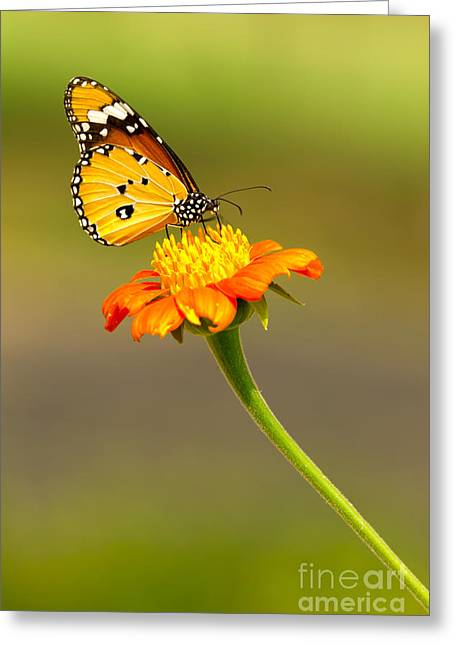 Exoticism Greeting Cards - Butterfly Greeting Card by Tosporn Preede