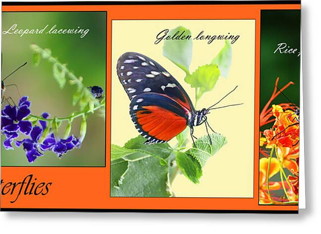 Golden Leopard Greeting Cards - Butterfly Triptych Greeting Card by Nikolyn McDonald
