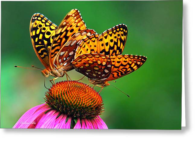 Pairs Greeting Cards - Butterfly Twins Greeting Card by Christina Rollo