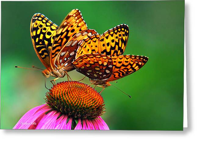 Butterfly On Flower Greeting Cards - Butterfly Twins Greeting Card by Christina Rollo
