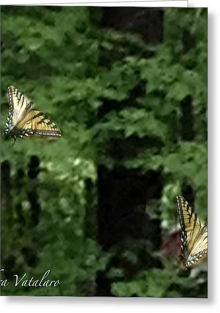 Ballet Of Colors Greeting Cards - Butterfly Waltz Greeting Card by Debra     Vatalaro