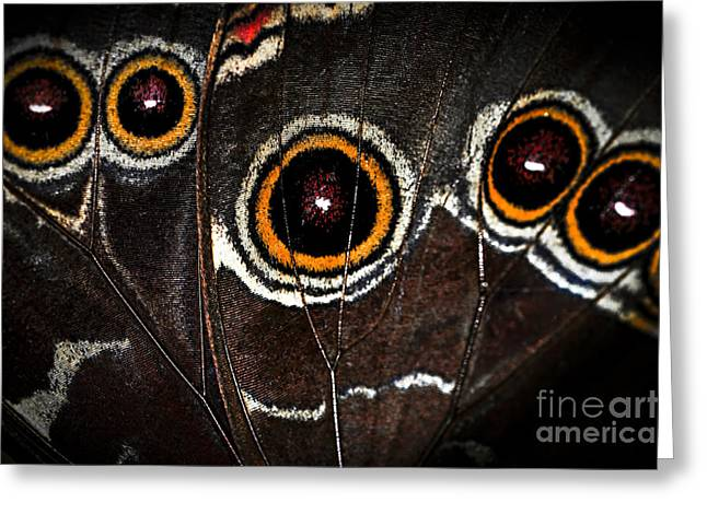 Antenna Greeting Cards - Butterfly wing Greeting Card by Elena Elisseeva