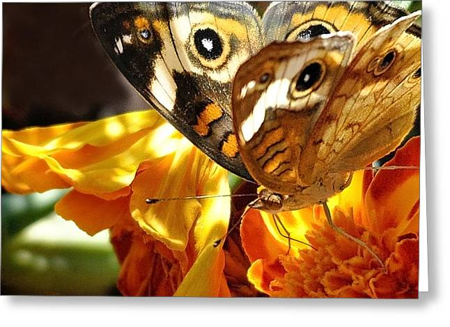 Nava Jo Thompson Greeting Cards - Butterfly Wings Greeting Card by Nava  Thompson