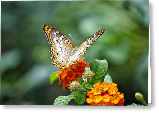 Central Il Greeting Cards - Butterfly Wings of Sun 2 Greeting Card by Thomas Woolworth