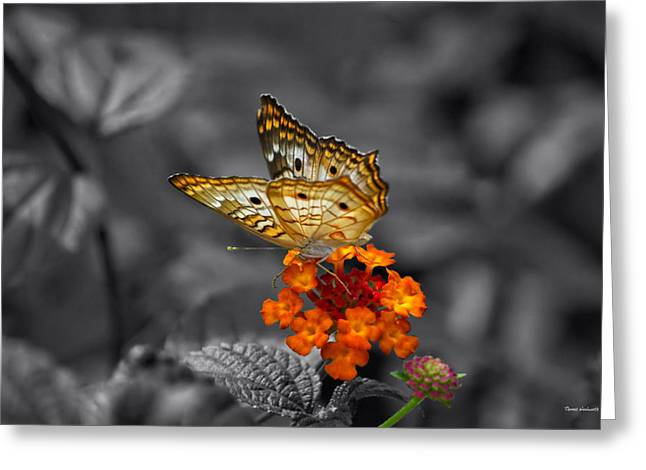 Central Il Greeting Cards - Butterfly Wings Of Sun Light Selective Coloring Black and White Digital Art Greeting Card by Thomas Woolworth