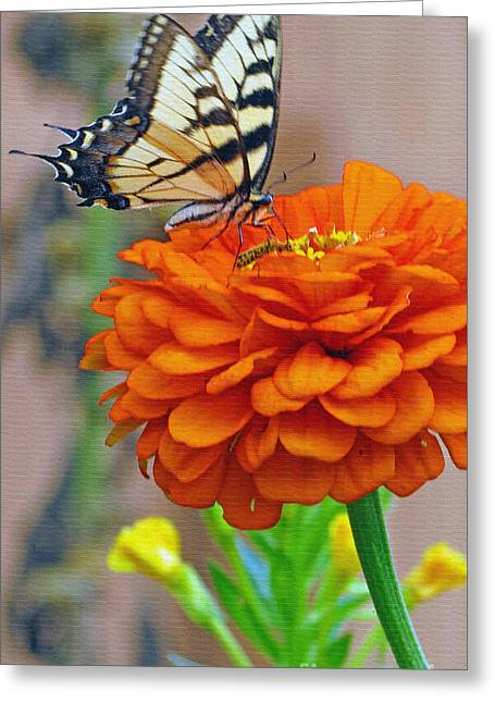 Garden Scene Greeting Cards - Butterfly With Colorful Zinnia Greeting Card by Kay Novy