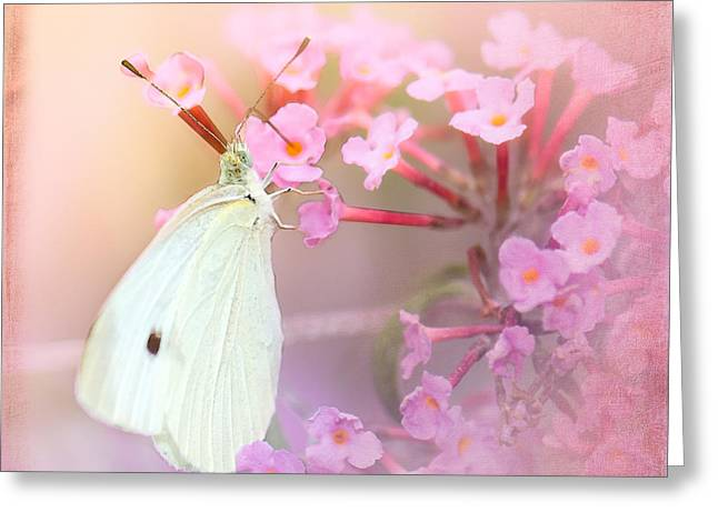 Cabbage White Butterfly Greeting Cards - Butterrfly Joy Greeting Card by Betty LaRue