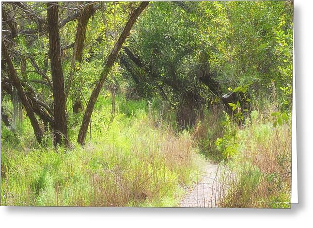 Mangrove Forest Greeting Cards - Buttonwood Forest Greeting Card by Rudy Umans