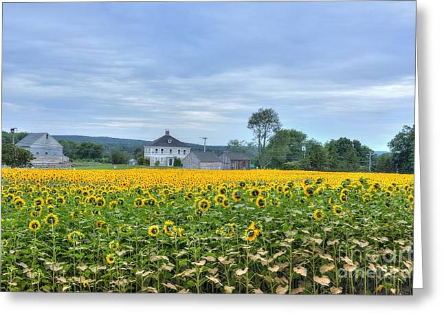 Griswold Connecticut Greeting Cards - Buttonwood Sunflower Farm Greeting Card by Marcel  J Goetz  Sr