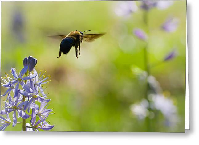 Arkansas Greeting Cards - Buzz Off Greeting Card by Annette Hugen