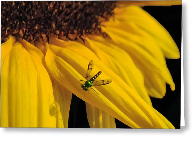 Stamen Digital Art Greeting Cards - Buzz Off Greeting Card by Charlie Cliques