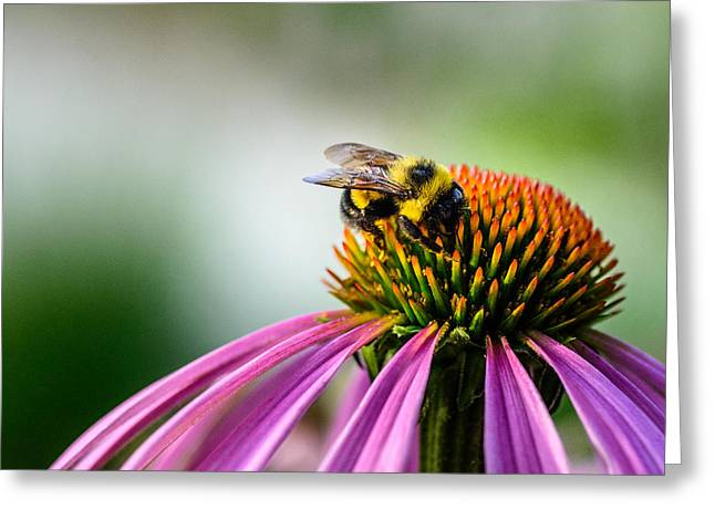 Nature Center Greeting Cards - Buzz Off This One Is Mine Greeting Card by Randy Scherkenbach