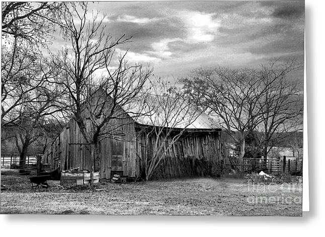 Dogwood Silhouette Greeting Cards - BW Barn Greeting Card by Stuart Mcdaniel