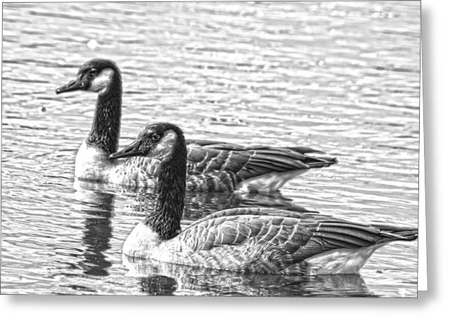 Geese Greeting Cards - BW HDR Geese on the Pond I Greeting Card by Lesa Fine