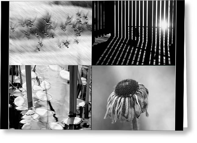 Aimelle Photography Greeting Cards - Bw Montage 01 Greeting Card by Aimelle