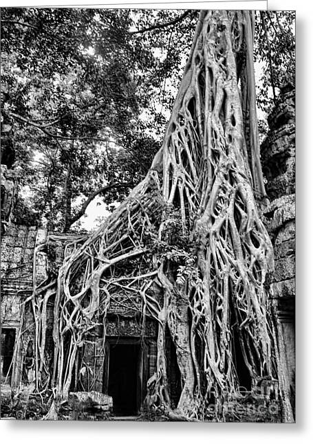 Tree Roots Photographs Greeting Cards - BW Roots Ta Prohm Greeting Card by Chuck Kuhn