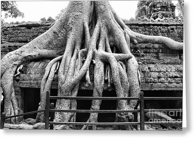 Tree Roots Greeting Cards - BW Ta Prohm  Greeting Card by Chuck Kuhn