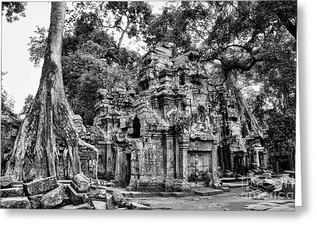 Tree Roots Greeting Cards - BW Ta Prohm III Greeting Card by Chuck Kuhn