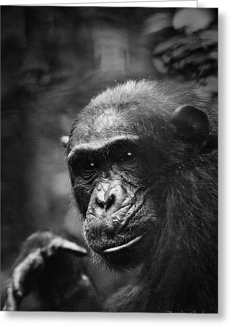 Chimpanzee Greeting Cards - BW wild chimpanzee Greeting Card by Dirk Ercken