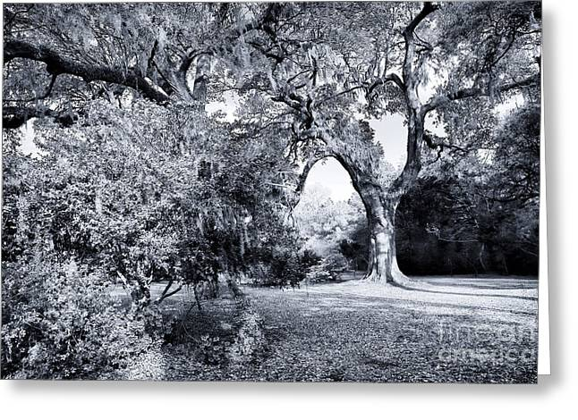 Historic Site Greeting Cards - By the Curved Tree Greeting Card by John Rizzuto
