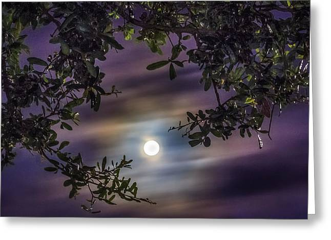 Creepy Digital Art Greeting Cards - By The Moonlight Greeting Card by Rob Sellers