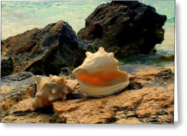 Shellscape Greeting Cards - BY the SEA Greeting Card by Karen Wiles