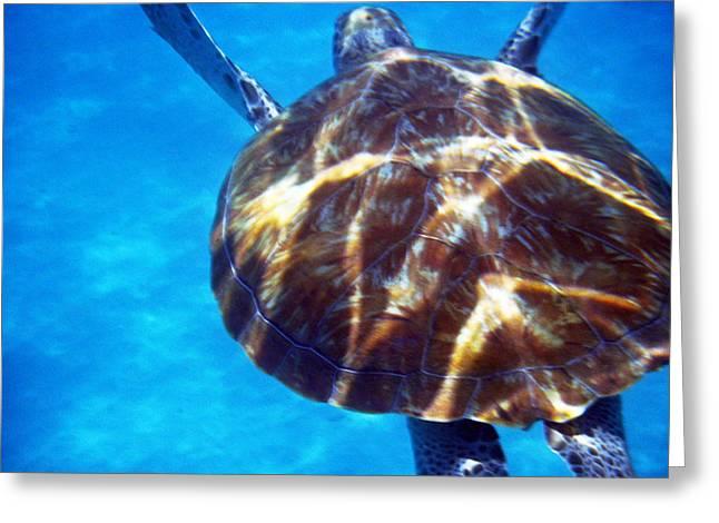 Undersea Photography Digital Art Greeting Cards - Aquatic Life Sea Turtles - Bye Bye Greeting Card by James Turnbull