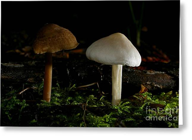 Fungi Greeting Cards - C Ribet Mushroom and Fungi Art Daybreak Parting Greeting Card by C Ribet