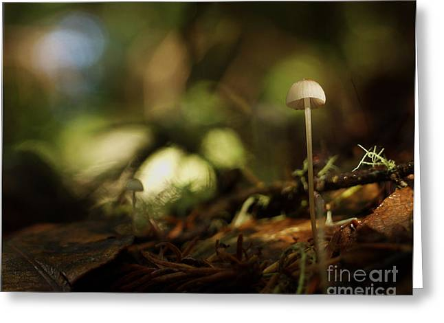 Close Up Greeting Cards - C Ribet Mushroom and Fungi Art Mute Ovation Greeting Card by C Ribet