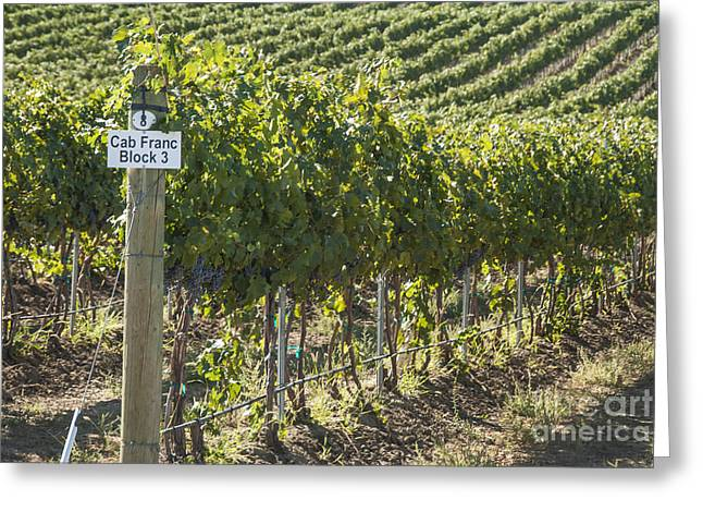 Vineyard Landscape Greeting Cards - Cab Franc Greeting Card by Juli Scalzi