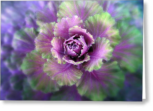 Cabbage Flower Greeting Card by Jessica Jenney