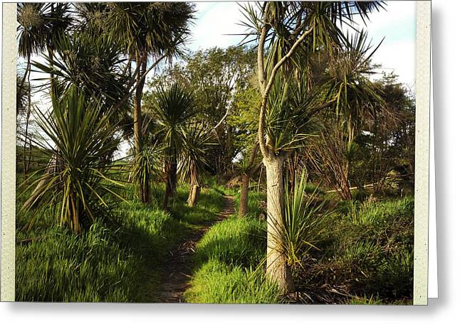 Tropical Photographs Greeting Cards - Cabbage trees Greeting Card by Les Cunliffe