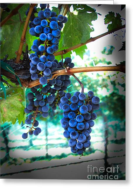 Trellis Greeting Cards - Cabernet Sauvignon Grapes Greeting Card by Robert Bales